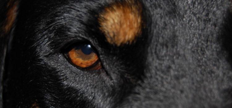 Behavioural problems dogs